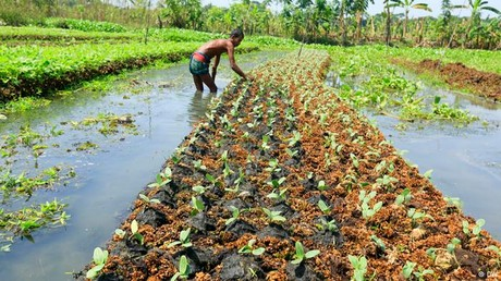 Floating Garden in Bangladesh